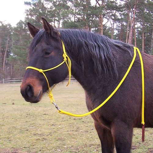 "Lead Rope Profi  ""Horse-Man-Ship 3,70m Bullsnap"" in 20 Colors"